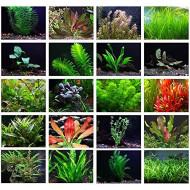 Растения для переднего плана