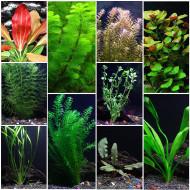 Растения для среднего плана